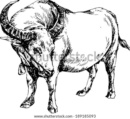 Carabao Stock Photos, Images, & Pictures | Shutterstock