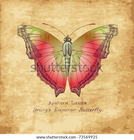 Hand drawn butterfly in vintage style - stock vector