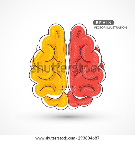 Hand-drawn colored brain. Color sketch of the brain. Colored hand drawn icon of the brain. - stock vector