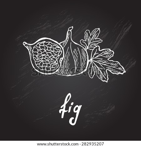 Hand drawn decorative fig, design element. Can be used for cards, invitations, gift wrap, print, scrapbooking. Kitchen theme. Chalkboard background. Sketch - stock vector