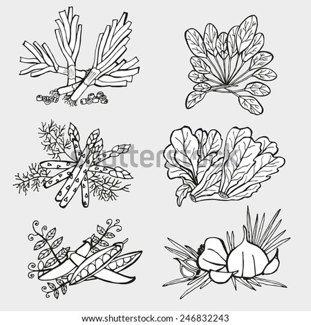 Hand drawn decorative vegetables, design elements. Can be used for cards, invitations, gift wrap, print, scrapbooking. Kitchen,nutrition theme - stock vector