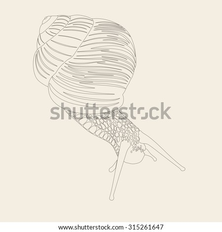 Hand drawn doodle vector outline snail illustration decorated with abstract ornaments. Abstract monochrome snail drawing. illustration of a snail - stock vector