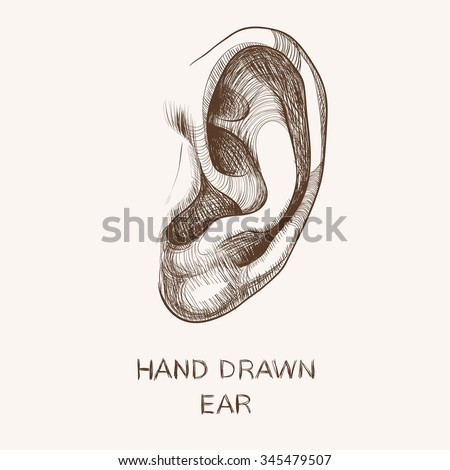 Hand drawn ear isolated on white background. Vector illustration. - stock vector