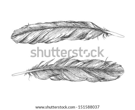 Hand drawn feather isolated on white background. Back and front of the same feather. - stock vector