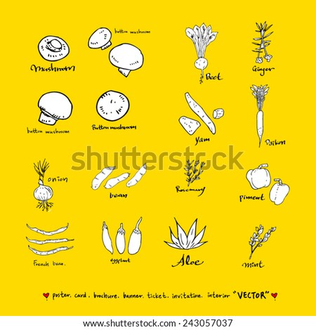Hand drawn food ingredients / food menu illustrations - stock vector