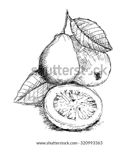 It is a photo of Candid guava juice coloring pages