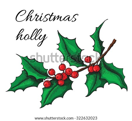 Hand drawn Holly. Christmas mistletoe plant. Christmas and holiday decor. - stock vector