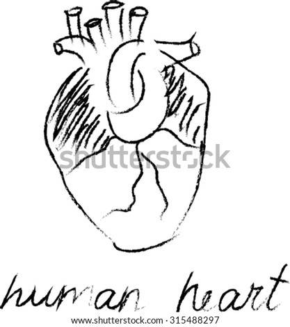 hand drawn human heart. sketch, doodle vector illustration - stock vector
