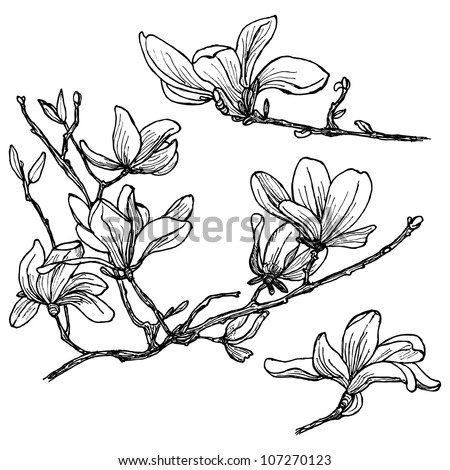 Hand-drawn magnolia flower set in vector - stock vector