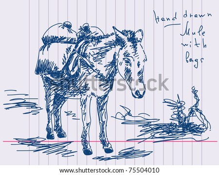 Hand drawn mule Vector. Visit my portfolio for big collection of doodles - stock vector