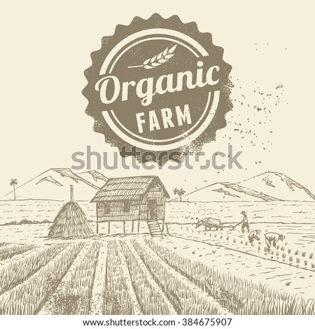 Hand drawn of farmers at rice field with grunge organic farm label - stock vector