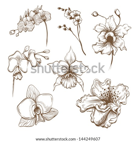 Hand drawn orchid flowers vector set - stock vector
