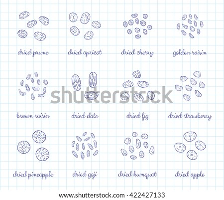 Hand drawn outline detailed dried fruits on graph paper background. Raisin, cherry, strawberry, goji, apricot, prune, apple, pineapple, date, fig, kumquat. - stock vector