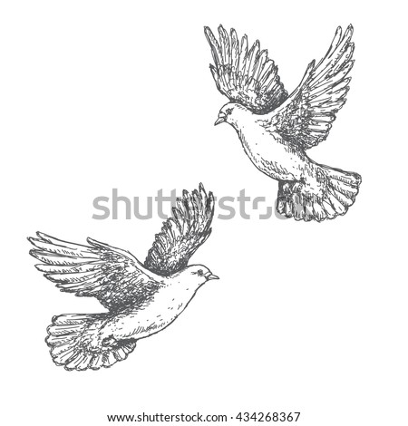 Hand drawn pair of flying doves isolated on white background. Black and white image. Two pigeons vector sketch. - stock vector
