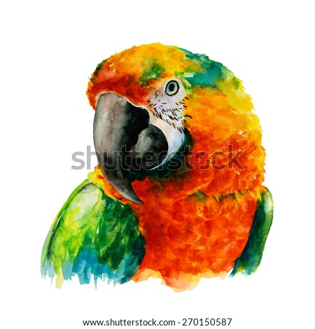 Hand Drawn Parrot Head, Macaw Watercolor Sketch, Vector Illustration. - stock vector