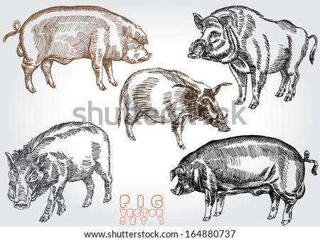 hand drawn pig vector set - stock vector