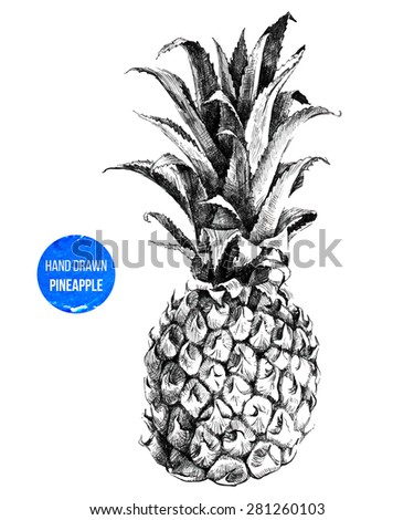 Hand drawn pineapple in color - stock vector