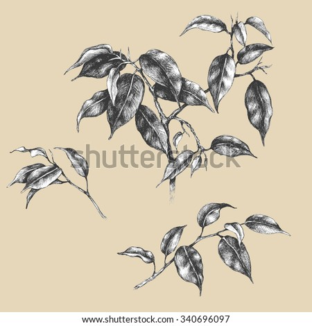Hand drawn set of branches and leaves of tropical plants. Vector sketch. - stock vector