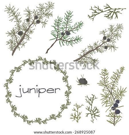 Hand drawn set of juniper, wreaths and decoration elements. vector illustration - stock vector