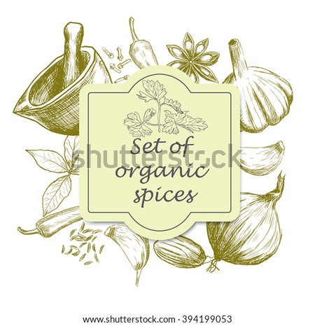 Hand drawn set of organic spices. Vector illustration - stock vector