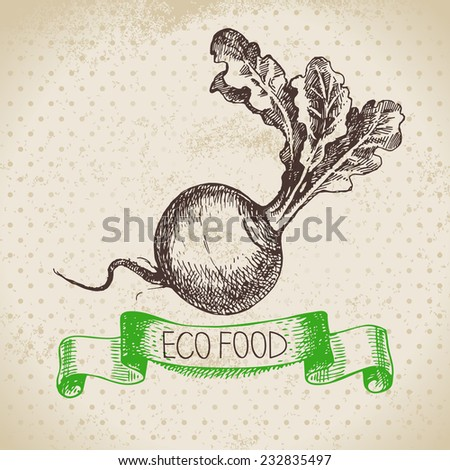 Hand drawn sketch turnip vegetable. Eco food background.Vector illustration - stock vector