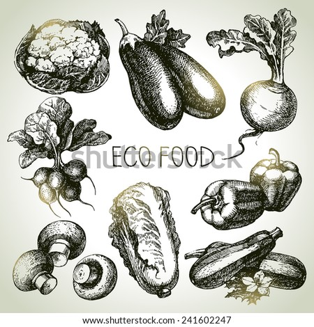 Hand drawn sketch vegetable set. Eco foods.Vector illustration - stock vector