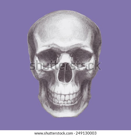 Hand drawn skull. Vector - stock vector
