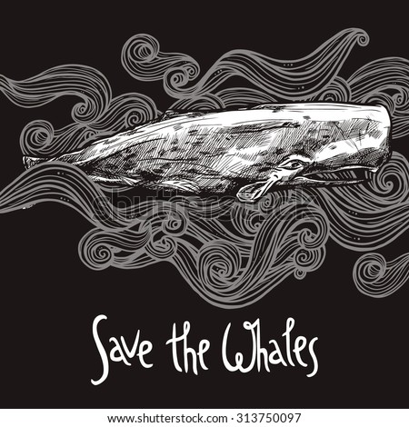 Hand Drawn Sperm Whale On Chalkboard - stock vector