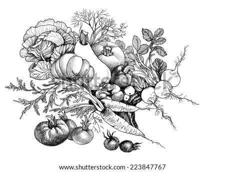 Hand drawn still life of vegetables vector illustration  - stock vector