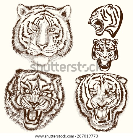 Hand drawn tigers set in engraved style - stock vector