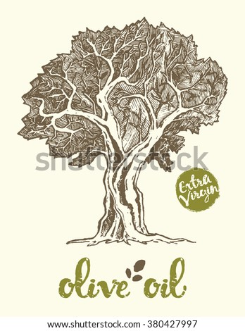 Hand drawn vector illustration of olive tree. Vintage label for olive oil. - stock vector