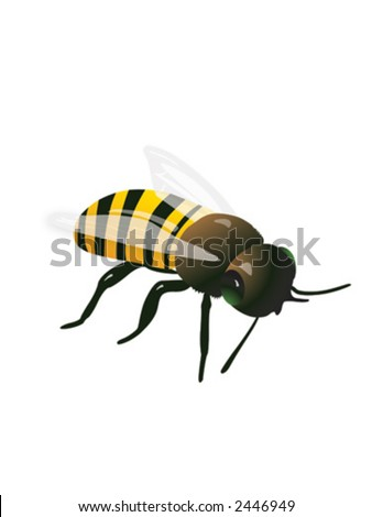 Hand-drawn vector of a honeybee - stock vector
