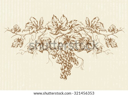 Hand drawn Vintage grapevine design element with bunch of grapes isolated on textured paper  - stock vector