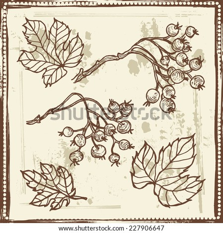Hand drawn   vintage leaves and berries  sketch.  All objects are conveniently grouped  and are easily editable. - stock vector