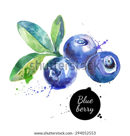 Hand drawn watercolor painting blueberry on white background. Vector illustration of berries - stock vector