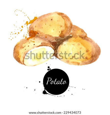 Hand drawn watercolor painting on white background. Vector illustration - stock vector