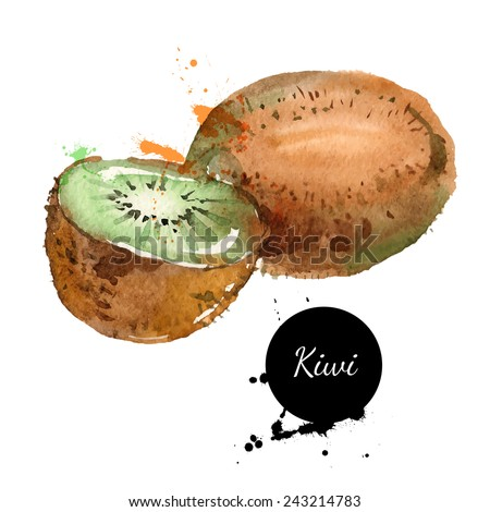 Hand drawn watercolor painting on white background. Vector illustration of fruit kiwi - stock vector