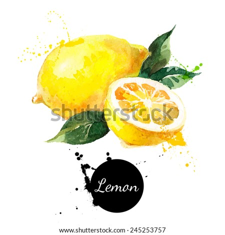 Hand drawn watercolor painting on white background. Vector illustration of fruit lemon - stock vector