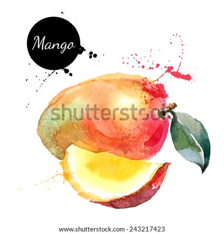 Hand drawn watercolor painting on white background. Vector illustration of fruit mango - stock vector