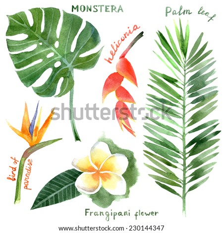 hand drawn watercolor tropical plants - stock vector