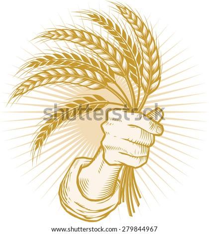 Handfull of Wheat - stock vector