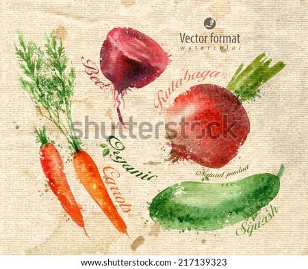 Harvest. Watercolor. Vector format - stock vector