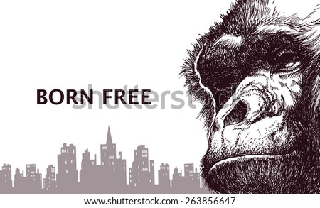 Head gorilla. Hand drawn. Vector illustration eps8  - stock vector