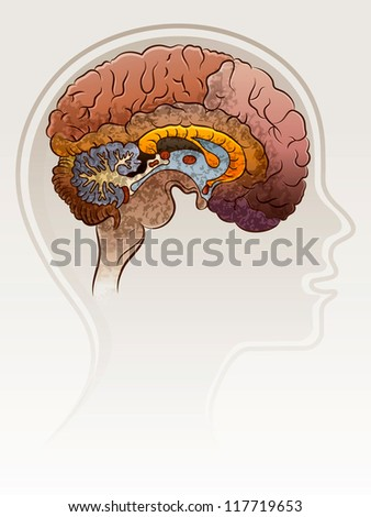 Head of the person with a brain. - stock vector