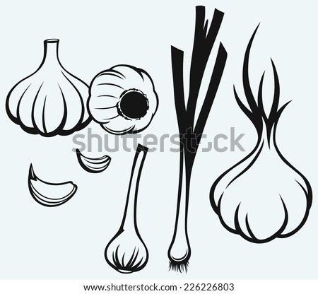 Heads of garlic. Young garlic isolated on blue background - stock vector