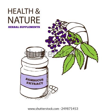 Health and Nature Supplements Collection.  Elderberry - Sambucus  - stock vector