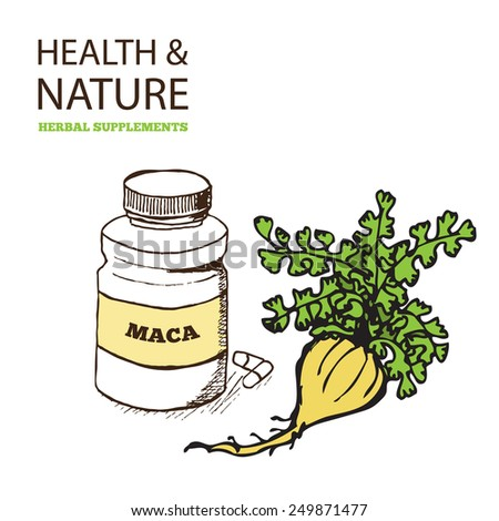 Health and Nature Supplements Collection. Maca - Lepidium meyenii - stock vector