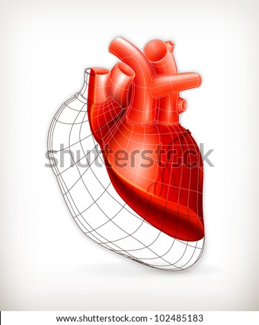Heart structure, vector - stock vector