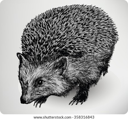 Hedgehog animal, hand drawing, vector illustration. - stock vector