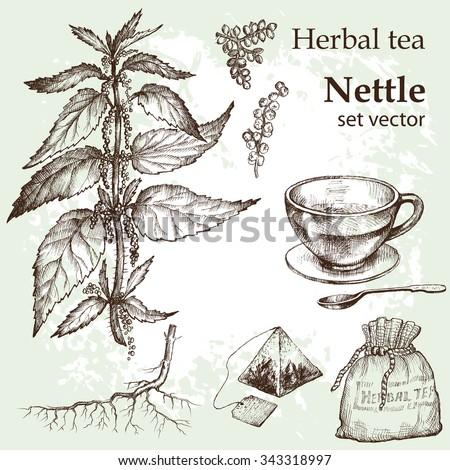 Herbal tea  set. Hand drawn. Vintage background.Nettle, nettle flowers, botanical drawing. Medicinal plant. - stock vector